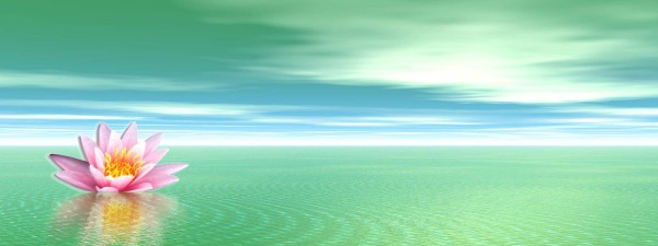 Lily flower in green ocean